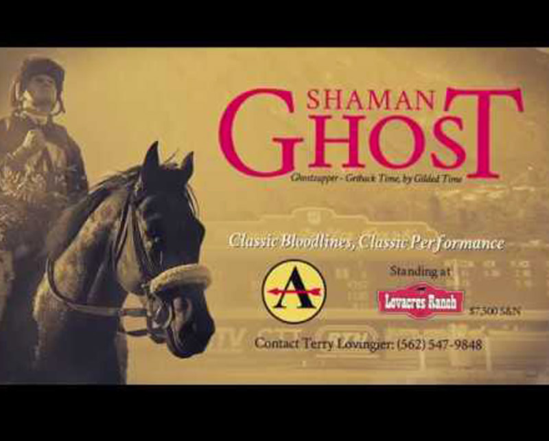 Shaman Ghost - Grandson of Prolific Sire Awesome Gain
