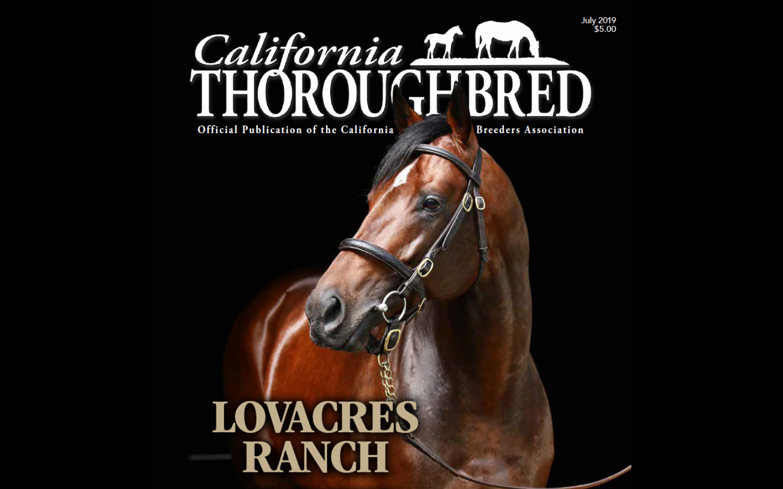 LOVACRES RANCH CALIFORNIA STALLION STAY THIRSTY IN THE LIMELIGHT July 2019